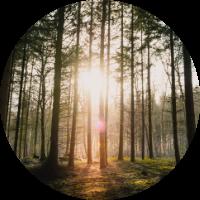 light shining through trees to show reiki therapy